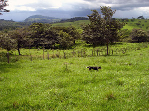 A dog has the run of huge fields on the 173-acre finca.