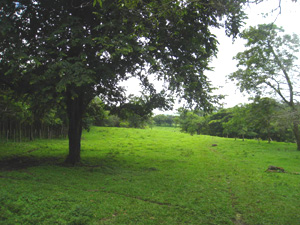 A long pasture between stands of forest has the appearance of a golf fairway.