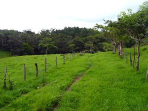 A internal road runs past a pasture and into a forest.