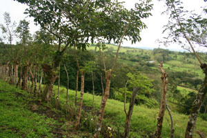 This 7.2 acre finca is reached by a secondary road in the beautiful La Tejona hills.