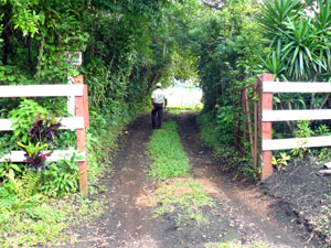 Entrance to the farm is through this dense canopy just off the paved Sabalito road.