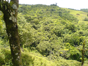 The finca includes protected forest, which frees the property from taxes.