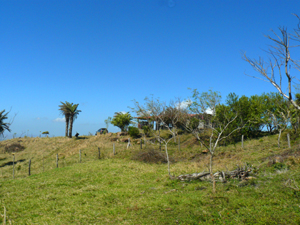 The finca has a small house in a grove near the top.