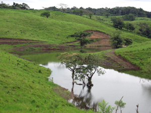 A beautiful pond fills the complex small valley amid sloping pastures on scenic  hills.