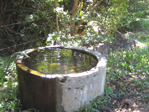 Pure spring water serves the animals as well as the home.