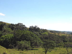 The finca is large enough to comprise substantial forested areas and level and well as sloping pastures.