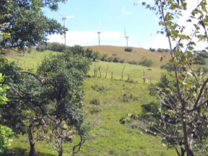 On the hilltop above the farm are some of the turbines that supply a major percentage of the electricity to Costa Rica.