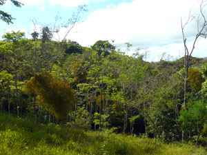 Neighboring forest is fine habitat for Costa Rica's famous wildlife.