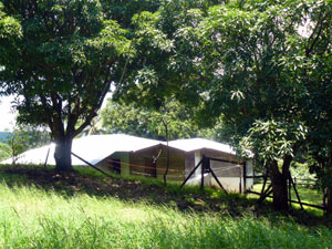 Mango trees stand between the house on the spring.