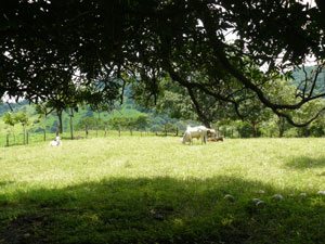 The farm has a great variety of pasture, old growth forests, secondary growth woods, and fruit trees.