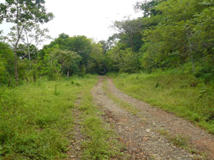 The road to the Interamerican Highway passes the lower end of the farm.