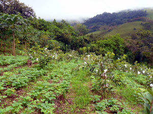 Beans and guayabas are two of the thriving crops here.
