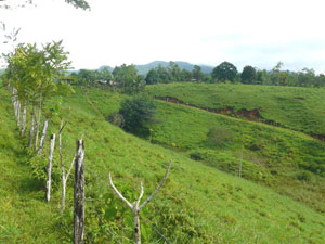 This view from the neighboring farm shows the interior road bordering the finca's west side.