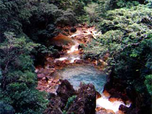 Forest reserves contain hot and cold rivers and pools and support many species of birds as well as animals.
