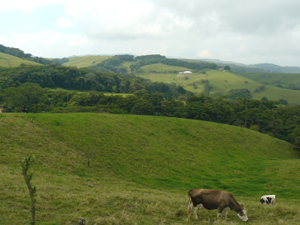 The central pasture is seen in the distance completely bordered by forest growing along 2 streams.