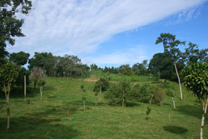 The property has extensive open land decorated with native and fruit trees.
