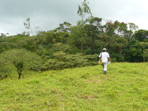 The ranch owner walks across a pasture toward the thick forest.
