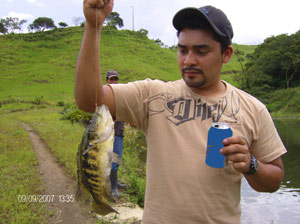 The lake is stocked with large guapote such as this one, the primary fish or which Lake Arenal is notable.