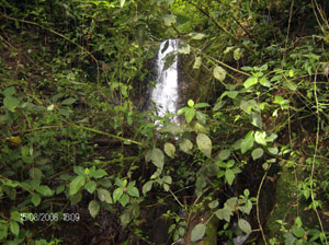 Another of the waterfalls on the finca.
