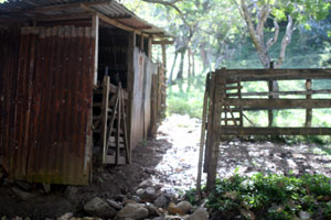 The only building on the property is this small tack building/shelter for two horses.