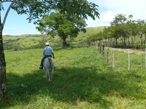 The finquero rides beside the entrance road back toward the stables.
