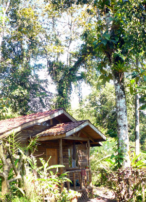 The cabins are surrounded by lush jungle as well as pretty landscaping and birds and animals abound.