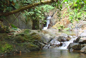 The forested peninsula and this finca abound in streams, waterfalls, ponds, and springs, as well as larger rivers.