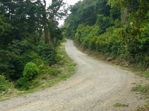 Just past the lodge entrance, the road to Monteverde is paved with concrete for most of the last 2 kilometers.