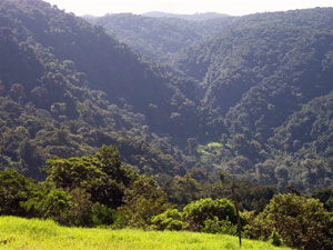 Thehotel has close and distant views of the incredibly lush rain forest.