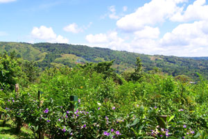 The 360-degree views include the jungled hills climbing away from the lake.