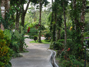 This path through the trees shows the typical care given to quality landscaping.