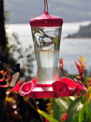 Feeders as well as flowering plants bring a amazing number of birds to the home, not just hummingbirds but a amny other colorful birds.
