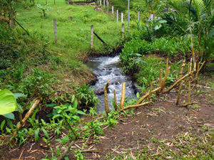 The healthy stream on the north side of the property in part forms the border but in part is within the property.