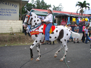 A boy prepares to showcase his painted horse's gaits in the bullring.