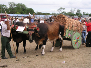 Each spring the village has a week-long fair dedicated to the powerful working oxen, whose owners display intricately painted carts.