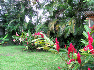 The current owners added many ornamental plants and 15 fruit trees of various types.