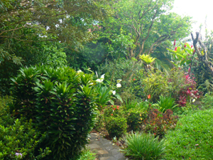 The grounds are a floral wonderland with a great variety of indigenous yet exotic plants and trees.
