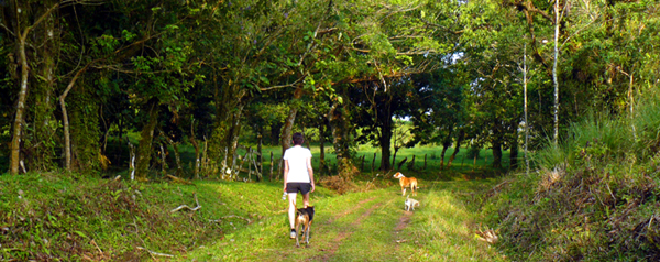 A 6:00 am hike with the dogs on the attractive little-used lane on the hilltop above Chimurria.