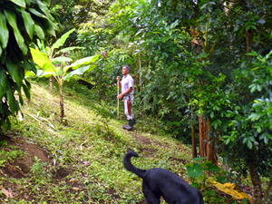 The property's caretaker tends some fruit trees on the slope below the house.