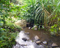 A year-round stream wanders the length of the property.