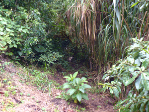 A trail leads to the end of the finca through natural flora that have reclaimed the disused pasture.