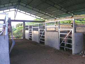 The large well designed stables has stalls for several horses.