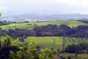 Above Los Angeles the pastured and forested hills climb toward the Lake Arenal mountains.