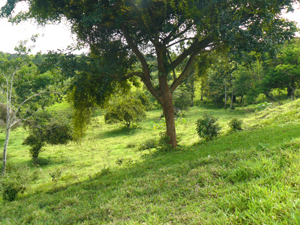 Though the lot as a whole is former pasture, there are attractive trees scattered about.