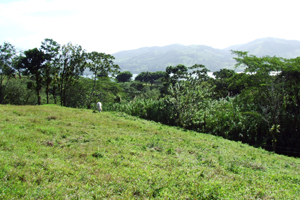 The lot has pasture, forest and lake and volcano views.